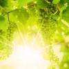 Wijntip #23: Radacini Vintage Chardonnay